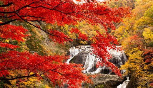 袋田の滝紅葉2019の見頃はいつからいつまで?現在の状況から時期を予想!