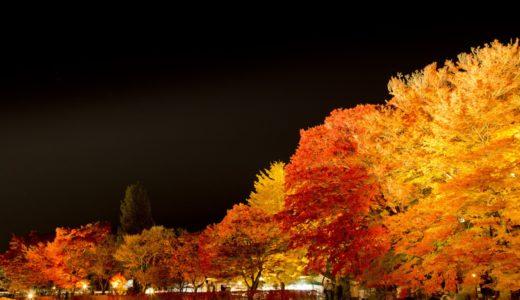 河口湖紅葉のライトアップの時間と2019時期はいつからいつまで?
