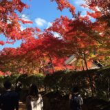 高野山紅葉混雑