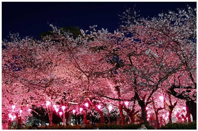 鶴舞公園4