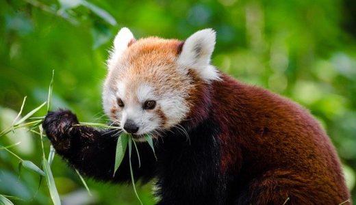 安佐動物公園ナイトサファリ2020情報まとめ!時間や料金、混雑状況をお届け