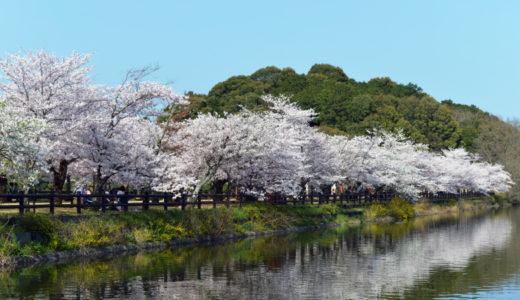 亀鶴公園の桜2020見ごろの時期は?開花情報や夜のライトアップを紹介!