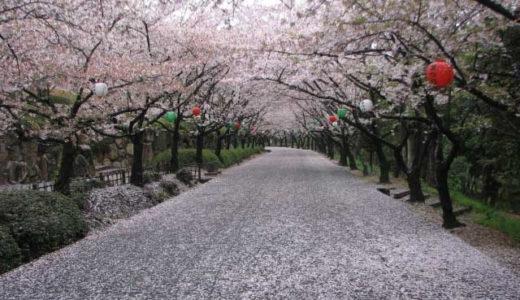 公渕森林公園の桜2020見ごろの時期は?開花情報や桜まつりを紹介!