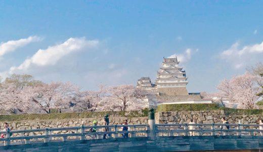 姫路城の桜(花見)の満開はいつ?おすすめの時期やスポット・穴場を紹介!