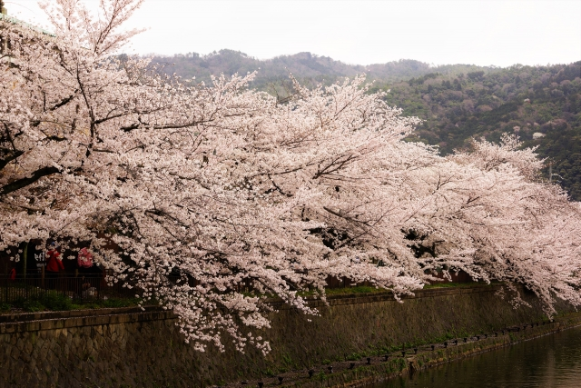 岡崎公園桜まつり