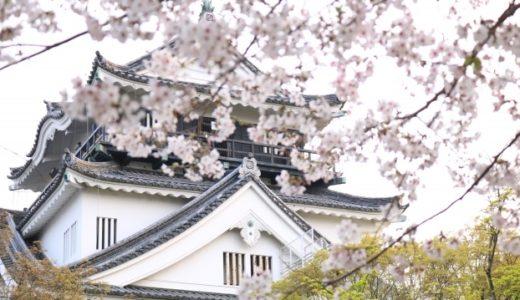 岡崎公園の桜2020見頃はいつ?現在の開花状況から満開を予想!