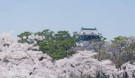 岡崎公園桜まつり2020の屋台や駐車場の情報をお届け!夜のライトアップの時間帯は?