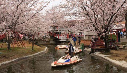 朝日山森林公園の桜2020見ごろの時期は?開花情報や夜のライトアップを紹介!