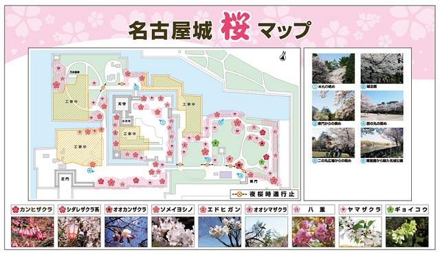 桜まつり5