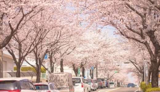 鶴舞公園の桜(花見)の駐車場は!?混雑回避と時間に注意【土日行く人は必見!】