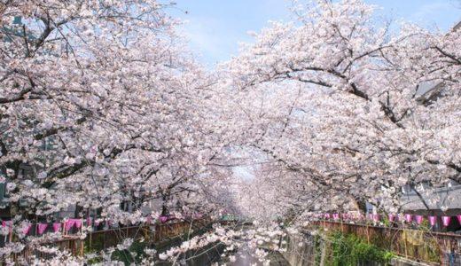 目黒川の桜のアクセス方法!最寄りの駅からの歩き方や空いてる時間を紹介
