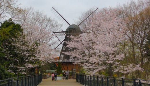 ふなばしアンデルセン公園の桜2020の満開はいつ?おすすめ見頃時期はいつからいつまで?