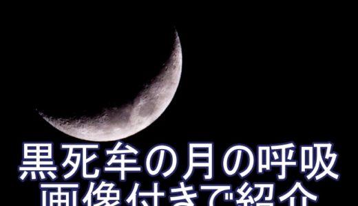 月の呼吸の16の型が最強!こくしぼう(黒死牟)の技を一覧で全紹介